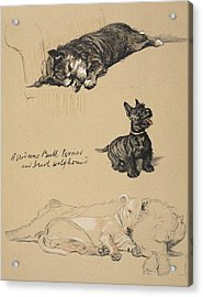 Aberdeens, Bull Terrier And Irish Acrylic Print by Cecil Charles Windsor Aldin