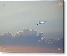Above It All Acrylic Print by Adele Moscaritolo