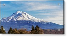 Above It All Acrylic Print by Nancy Marie Ricketts