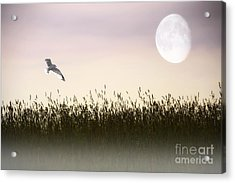 Above The Tall Grass Acrylic Print by Tom York Images