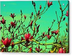 Above The Tree Acrylic Print