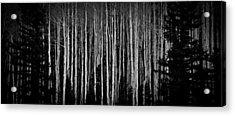 Abstract Aspens Acrylic Print