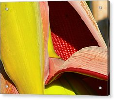 Abstract Banana Bloom Acrylic Print