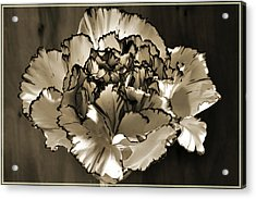 Abstract Carnation Acrylic Print by Terence Davis
