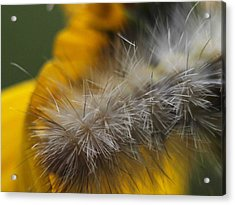 Abstract Caterpillar Acrylic Print by Monica Veraguth