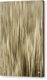 Abstract Cattails Acrylic Print by Thomas Young