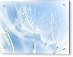 Abstract Dandelion Background Acrylic Print by Anna Om