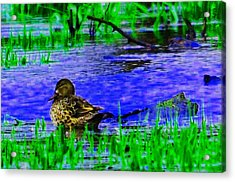 Abstract Duck Acrylic Print by Valarie Davis