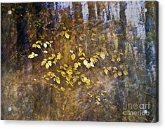 Abstract Forest Acrylic Print by Yuri Santin