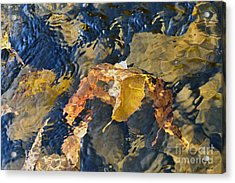 Abstract Leaves In Water Acrylic Print by Dan Friend
