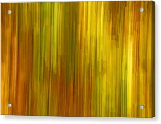 Abstract Nature Background Acrylic Print by Gry Thunes