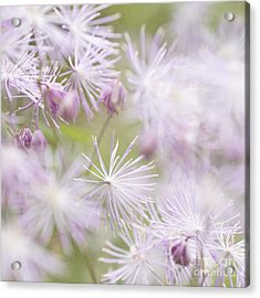 Abstract Nature Pink Burst Acrylic Print by Circe Lucas