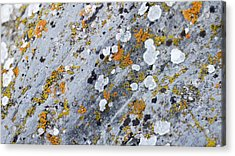 Abstract Orange Lichen 2 Acrylic Print by Chase Taylor