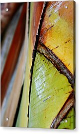 Acrylic Print featuring the photograph Abstract Palm 2 by Heather Green