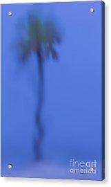Abstract Palm Acrylic Print