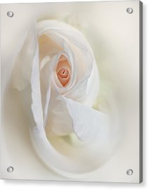 Abstract Pastel Rose Flower Acrylic Print by Jennie Marie Schell