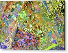 Abstract Polarised Light Micrographs Acrylic Print by Steve Lowry