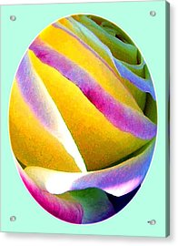 Abstract Rose Oval Acrylic Print by Will Borden