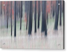 Abstract Trees Acrylic Print