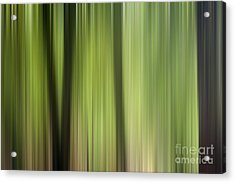 Abstract Trees In The Forest Acrylic Print by Natalie Kinnear