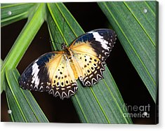 Butterfly On Leaves Acrylic Print