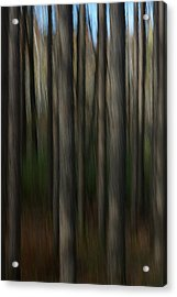 Abstract Woods Acrylic Print