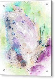 Abstracted Butterfly Acrylic Print by Jill Balsam