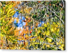 Abstracts Of Nature Acrylic Print by Frozen in Time Fine Art Photography