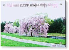 Acrylic Print featuring the photograph Abundant Blossom by Pamela Hyde Wilson
