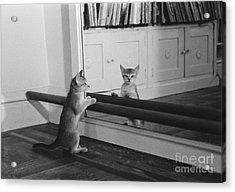 Abyssinian Kitten In Dance Studio Acrylic Print by Joan Baron
