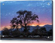 Acacia At Sunset Acrylic Print by Photostock-israel
