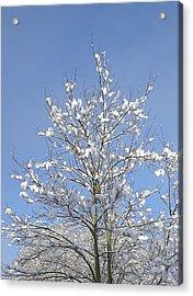 Ash Tree In Winter Acrylic Print