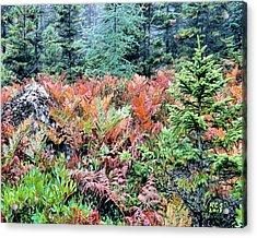 Acadia Ferns Acrylic Print