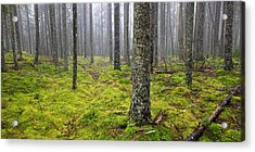 Acadia Woods Acrylic Print by Patrick Downey