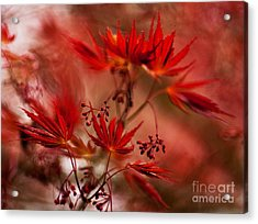 Acer Storm Acrylic Print by Mike Reid