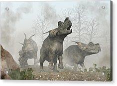 Achelousauruses Acrylic Print