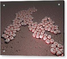 Acinetobacter Baumannii Bacteria Acrylic Print by Hipersynteza