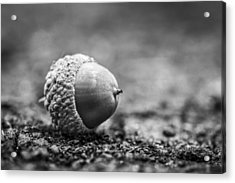 Acrylic Print featuring the photograph Acorn. by Gary Gillette