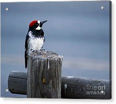 Acrylic Print featuring the photograph Acorn Woodpecker by Gary Brandes