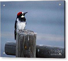 Acorn Woodpecker Acrylic Print by Gary Brandes