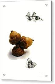 Acorns  Acrylic Print