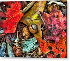Acorns And Leaves Acrylic Print by Kenny Francis