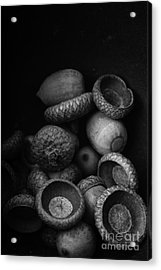Acorns Black And White Acrylic Print by Edward Fielding