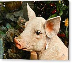 Acrylic Pig At Discount Acrylic Print