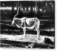 Addax Spirit Of The Desert Acrylic Print