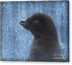 Adelie Winter Magic... Acrylic Print by Nina Stavlund