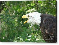 Acrylic Print featuring the photograph Adler Raptor Bald Eagle Bird Of Prey Bird by Paul Fearn