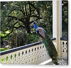 Admiring The View Acrylic Print