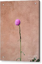Adobe  Acrylic Print by Polly Anna