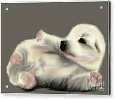 Adorable Pup Acrylic Print